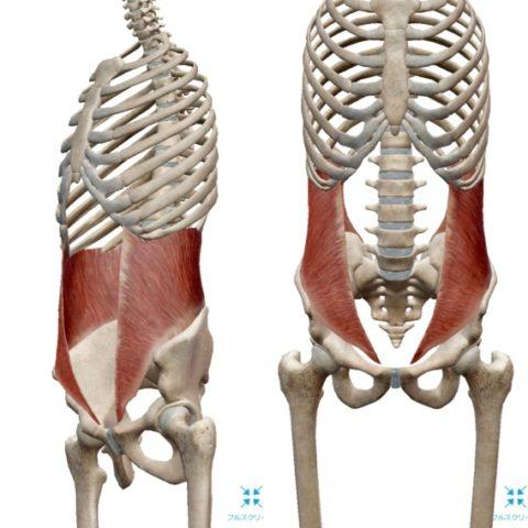 腰痛の原因、インナーマッスル
