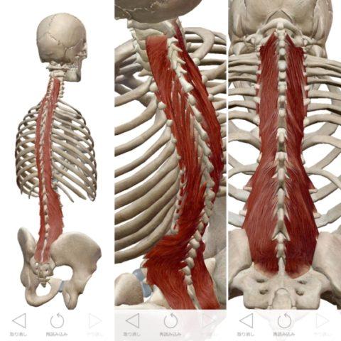 腰痛原因、多裂筋